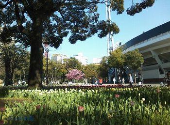 150330横浜スタジアムのチューリップ.jpg