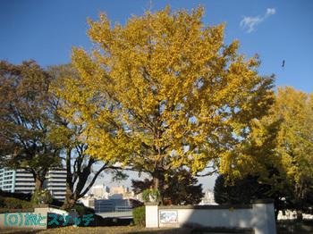 101202イタリア山庭園.jpg