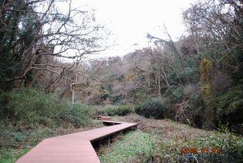 150102小網代の森.jpg